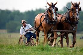 farming with 2 horses
